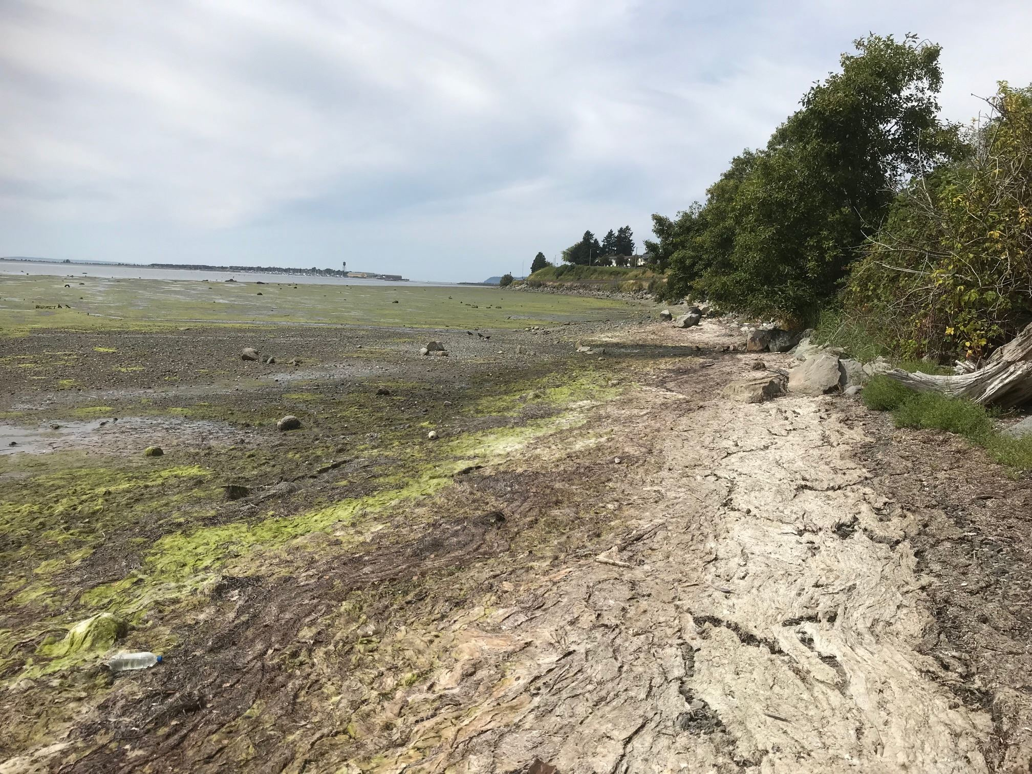 alternate view of Drayton Harbor at low tide